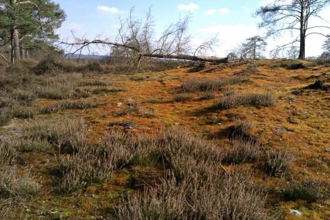 more orange grass