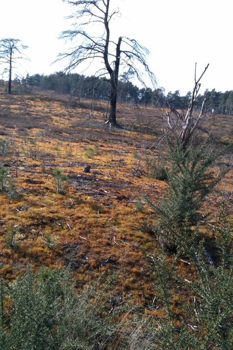 orange desert in surrey