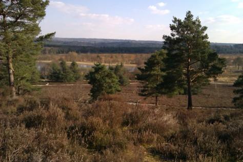views over surrey