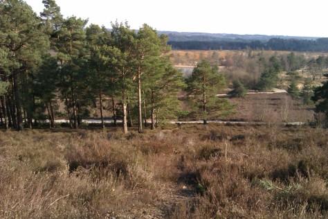 views over frensham