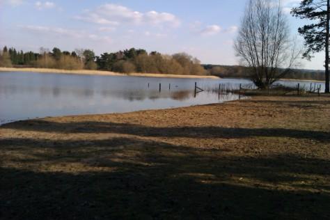 snow white little pond