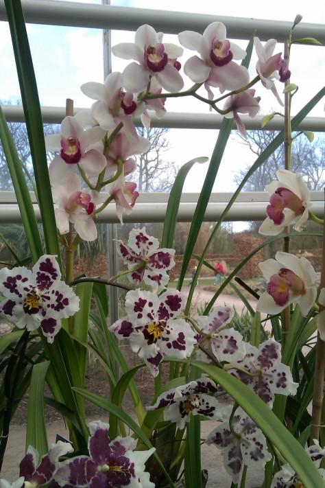 orchids at the glasshouse