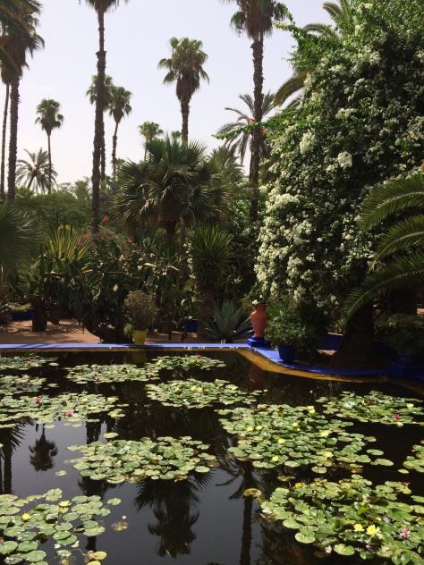 Majorelle Gardens 4