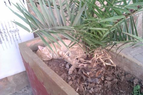 sleeping cat in souk