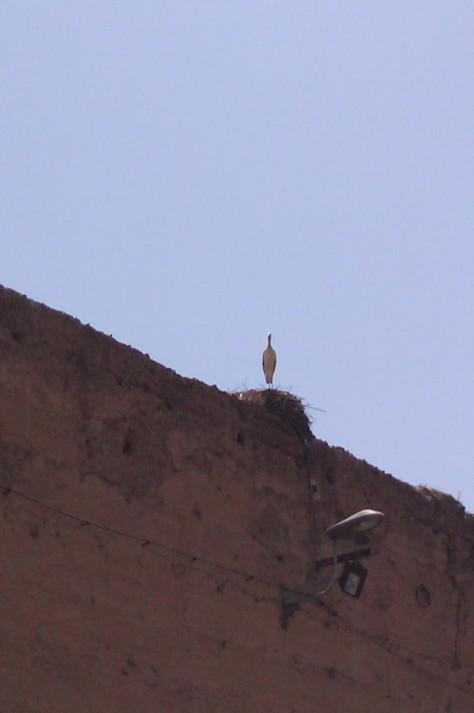el badi palace stork