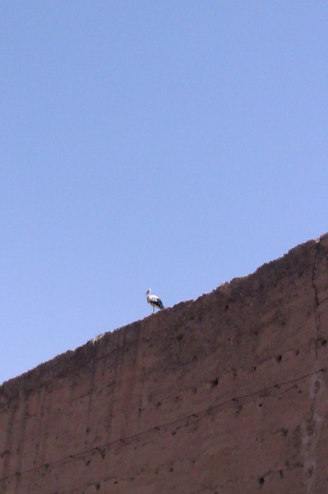 stork in marrakech