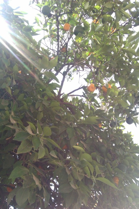 el bahia palace oranges
