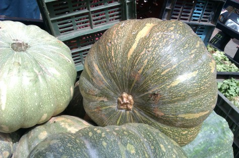 pumpkin squashes in essaouira